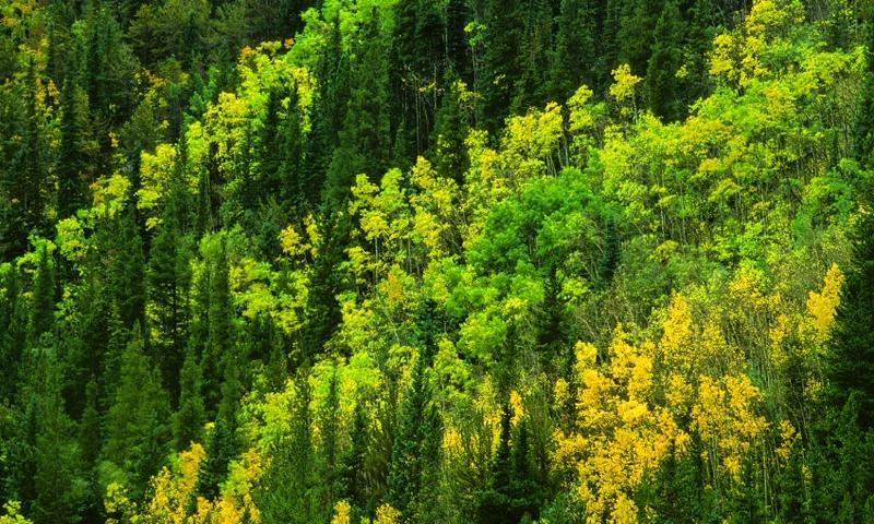 Arapaho National Forest Colorado Alltrips